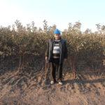 Саженцы яблони типа Книп — Баум